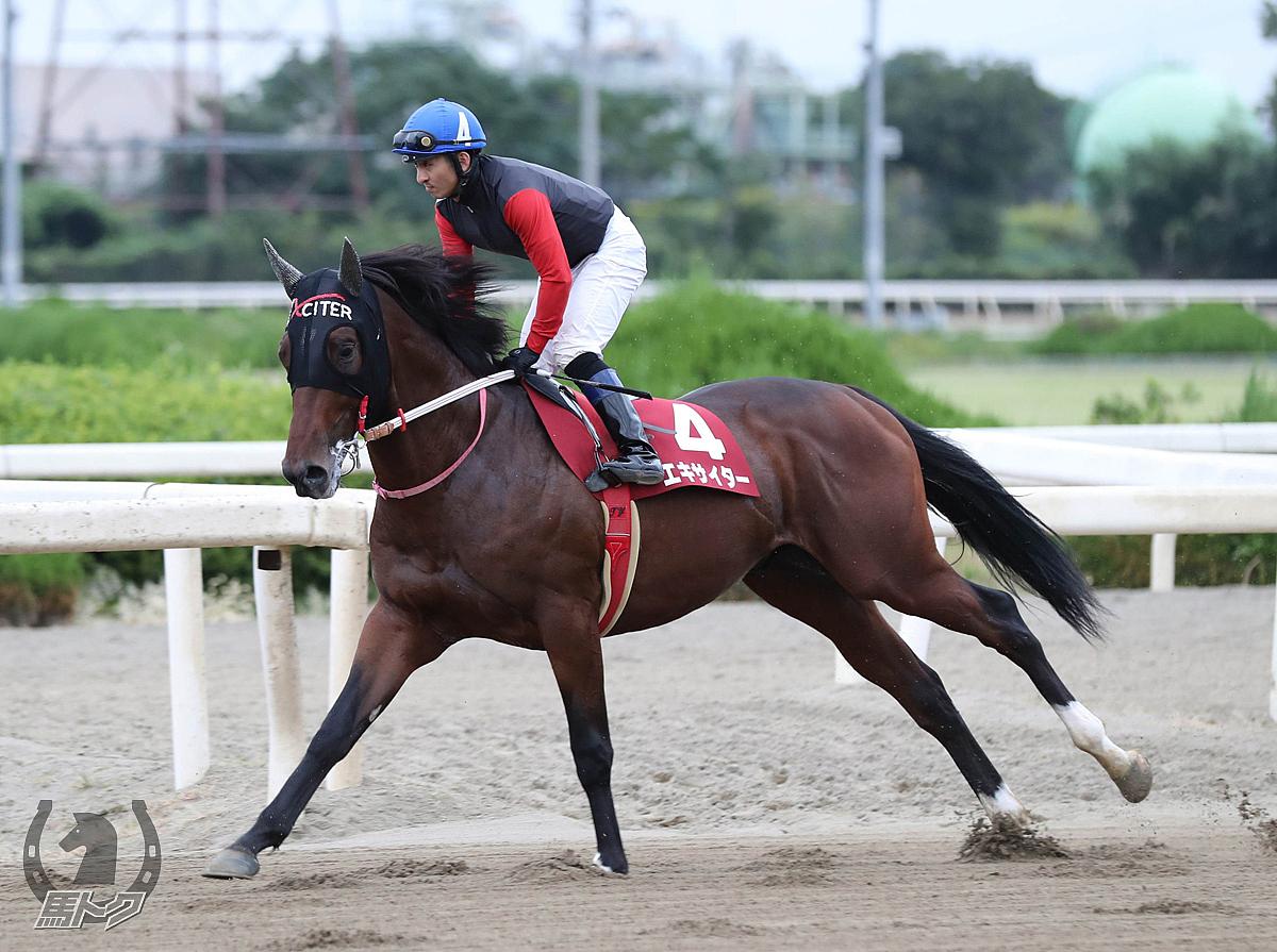 エキサイターの馬体写真