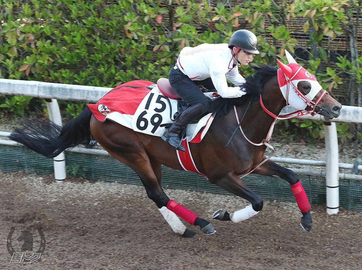 パンサラッサの馬体写真