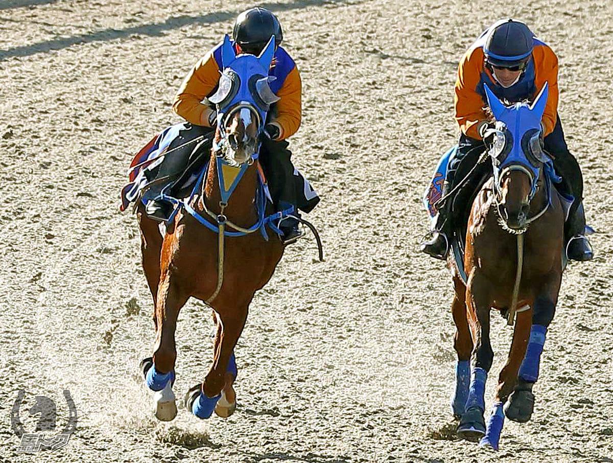 サイモンルモンドの馬体写真
