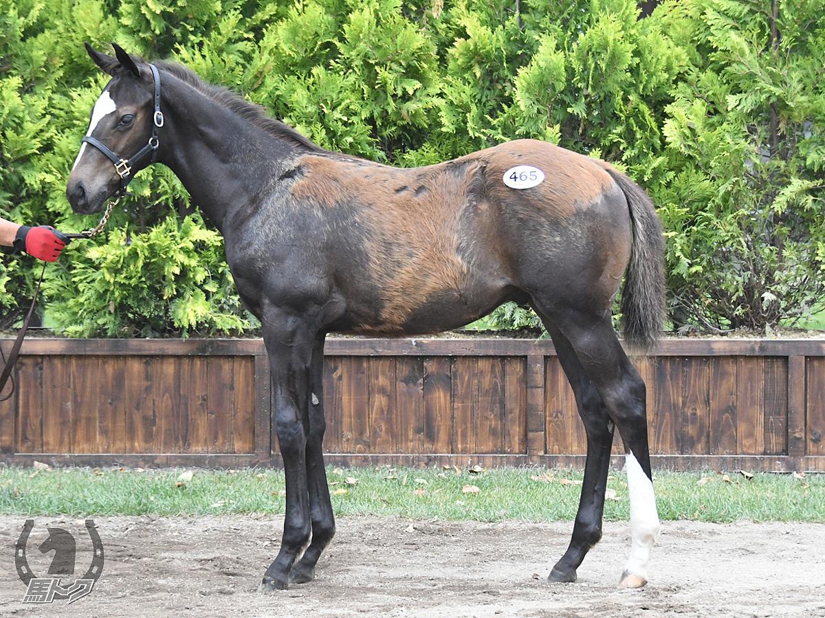 キチロクサイレンスの馬体写真
