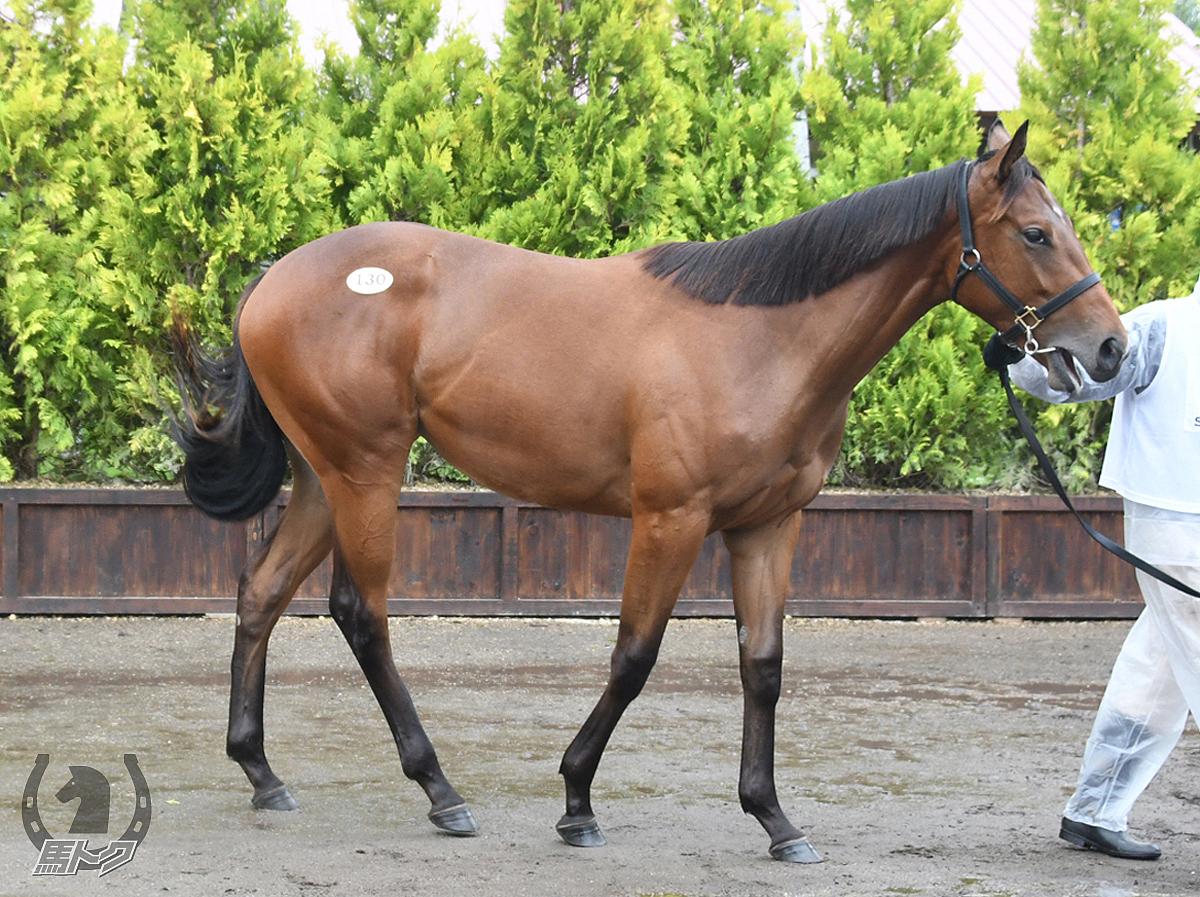リュウノナミの馬体写真
