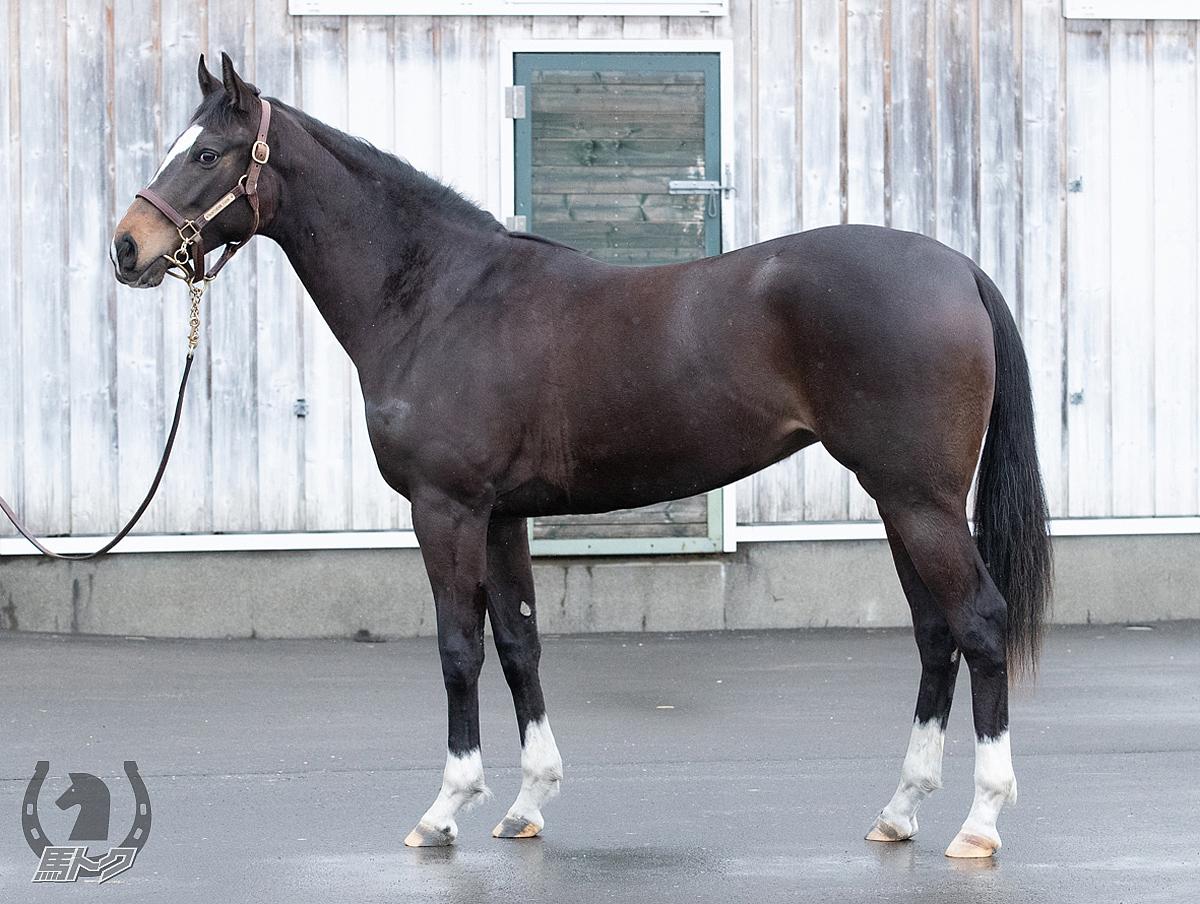 セレナズヴォイスの馬体写真