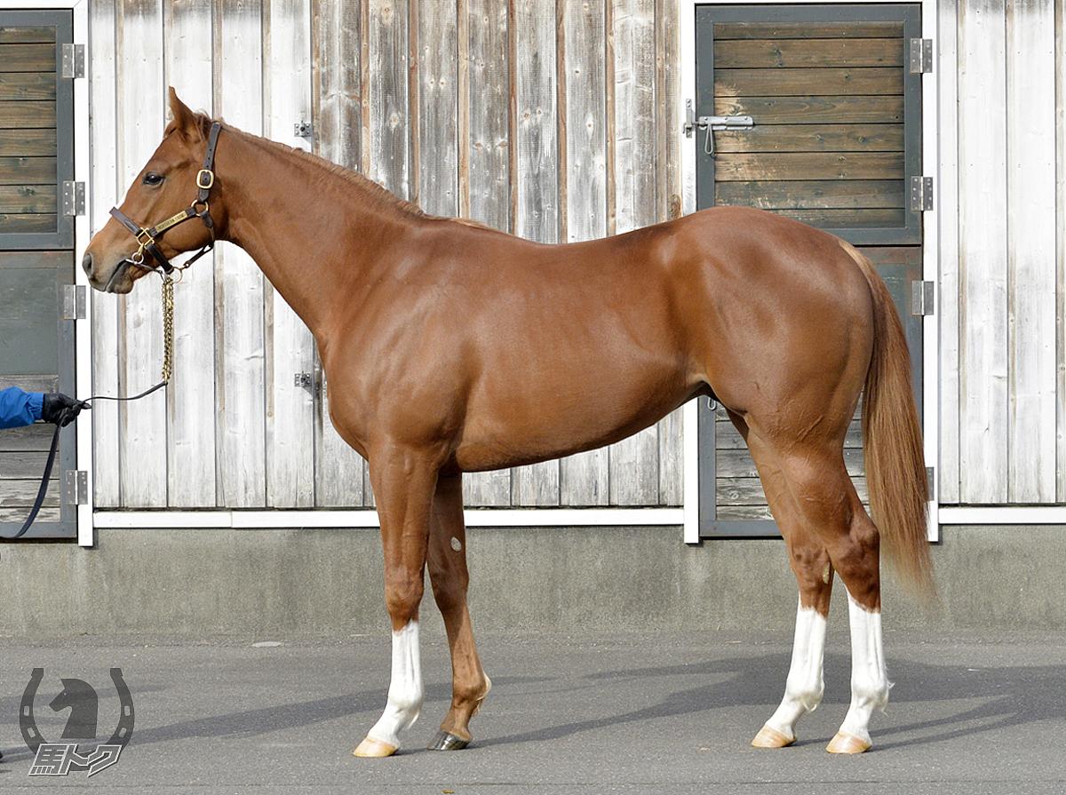 アルファウェーブの馬体写真