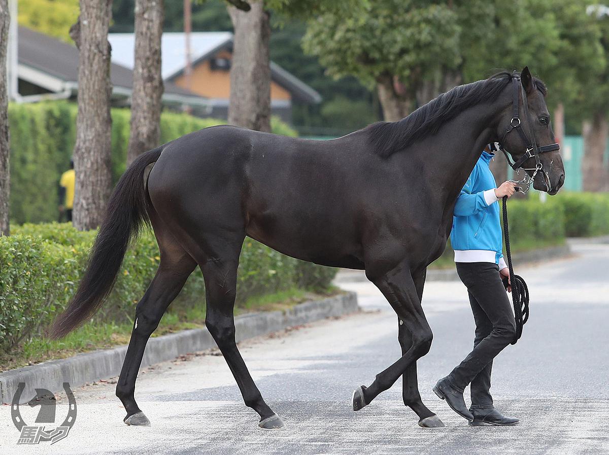 ターキッシュパレスの馬体写真