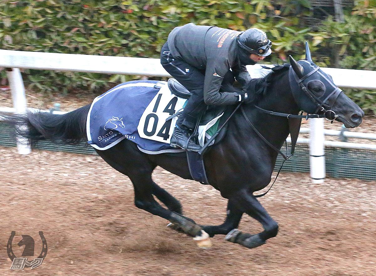 トリプルエースの馬体写真