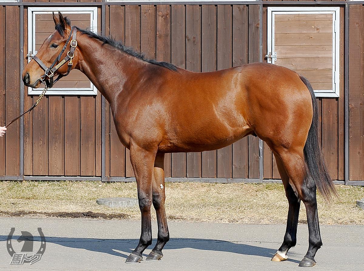 アブルハウルの馬体写真