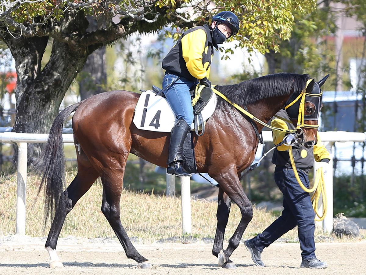 アメリカンシードの馬体写真