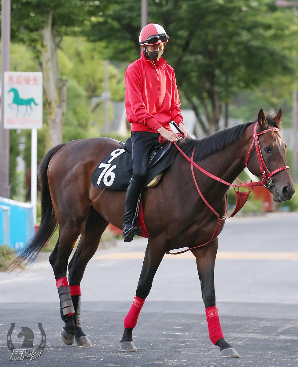 フルフラットの馬体写真