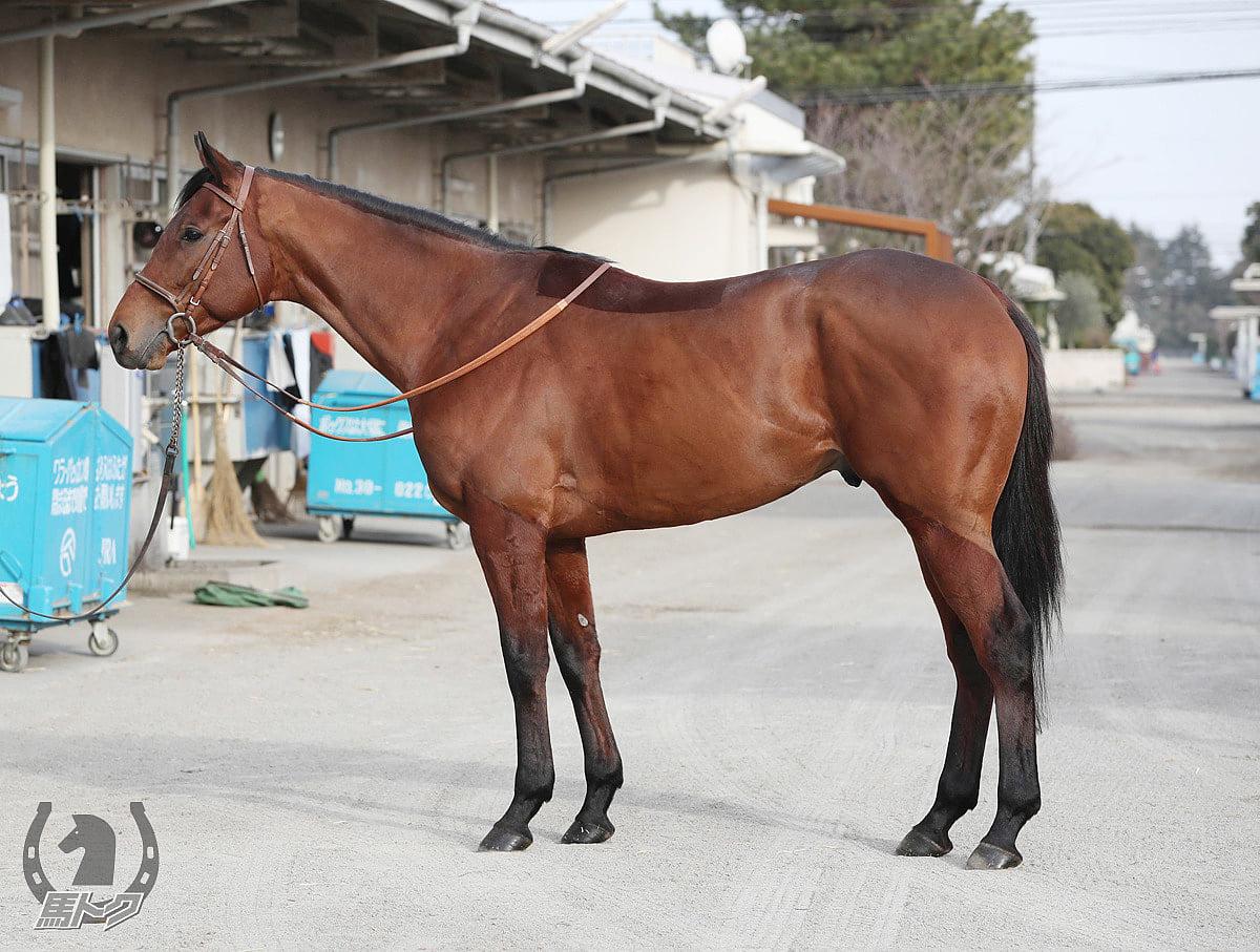 カフェファラオの馬体写真