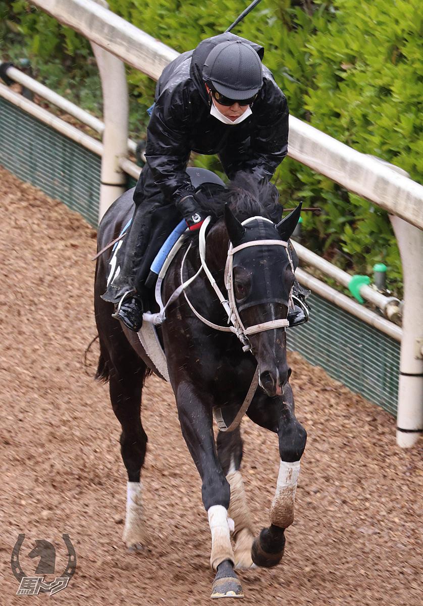 ノースザワールドの馬体写真