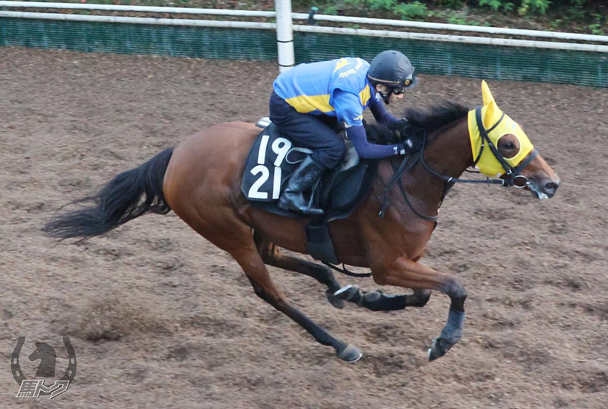 オータムヒロインの馬体写真