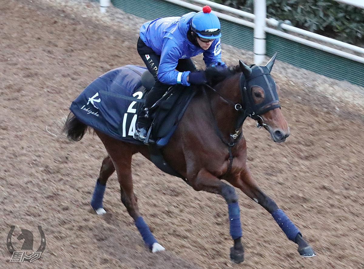 オプティミスモの馬体写真