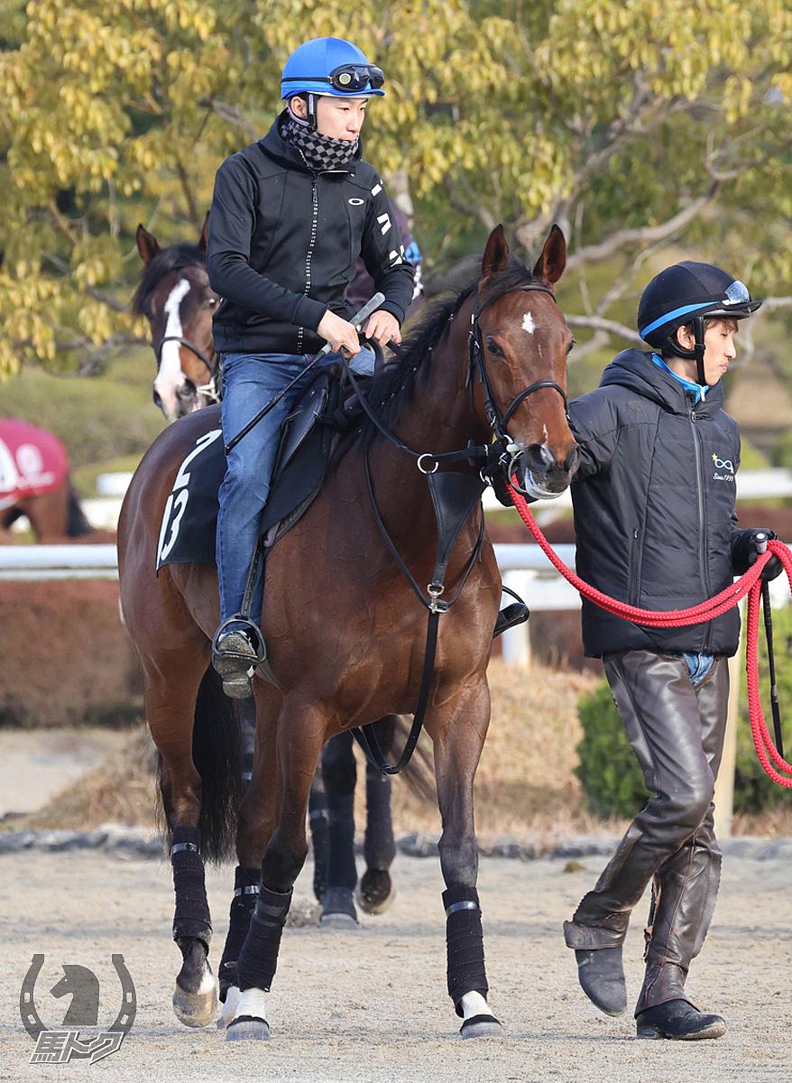 オパールムーンの馬体写真
