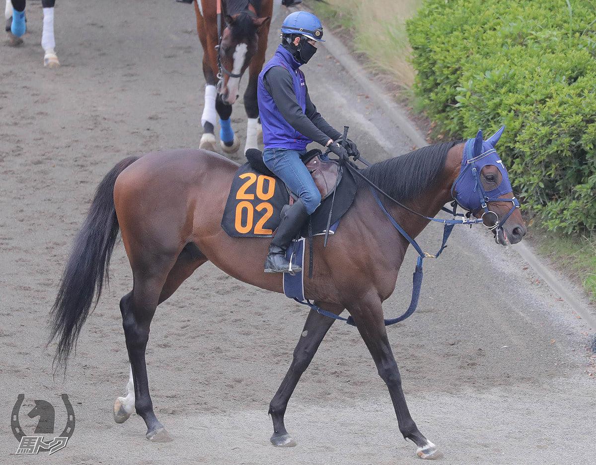 アサマノイタズラの馬体写真