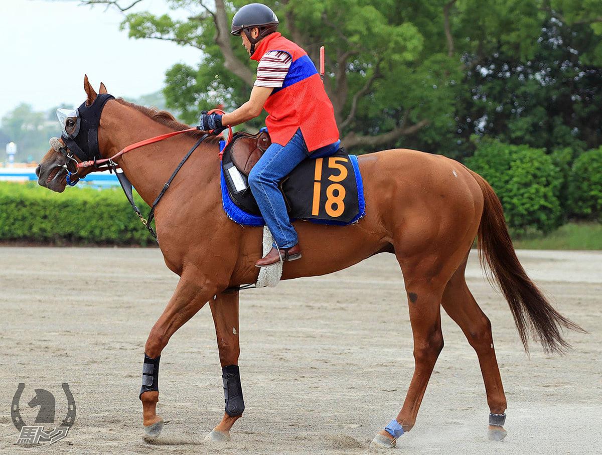 ルーチェドーロの馬体写真