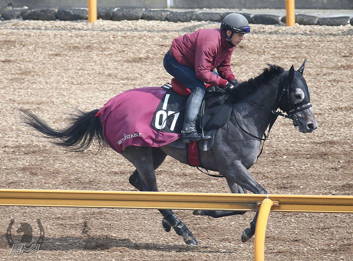 ヴィゴーレの馬体写真