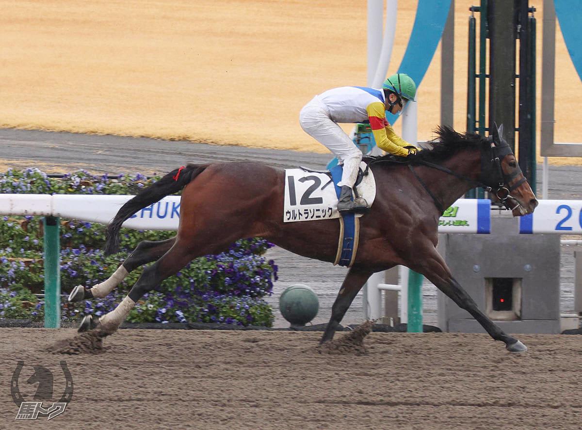 ウルトラソニックの馬体写真