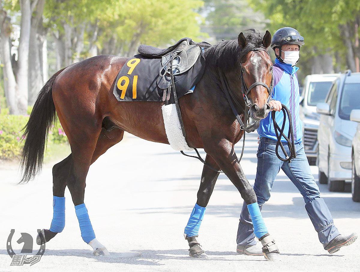 ノースブリッジの馬体写真