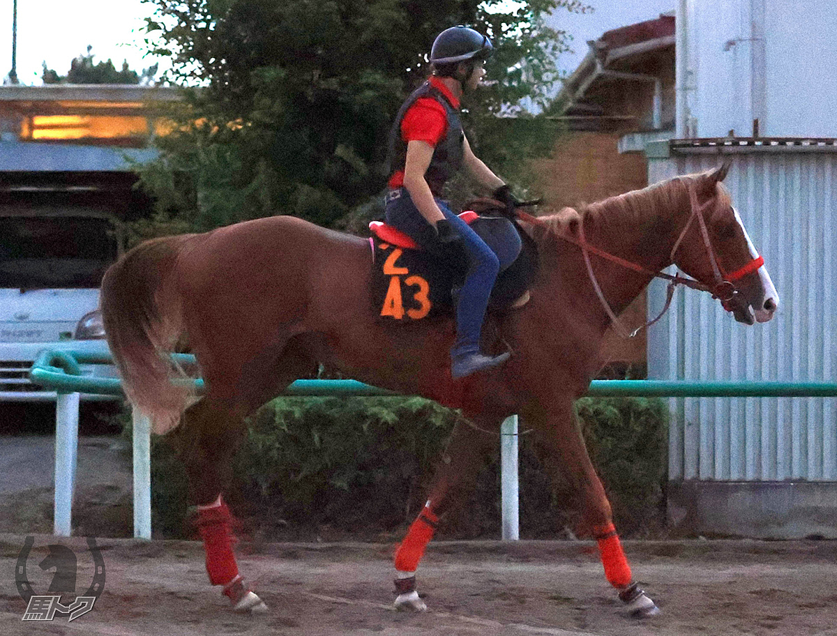 オセアダイナスティの馬体写真