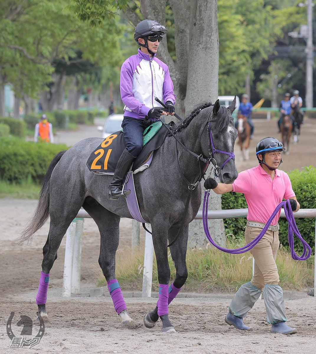 ティアップリオンの馬体写真