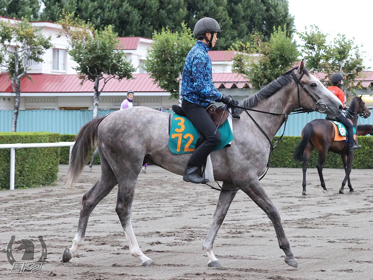 コスモアシュラの馬体写真