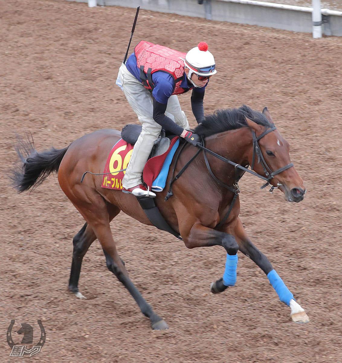パープルレディーの馬体写真