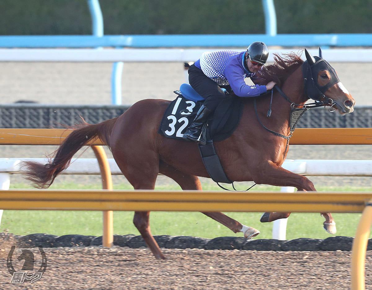 ルースの馬体写真
