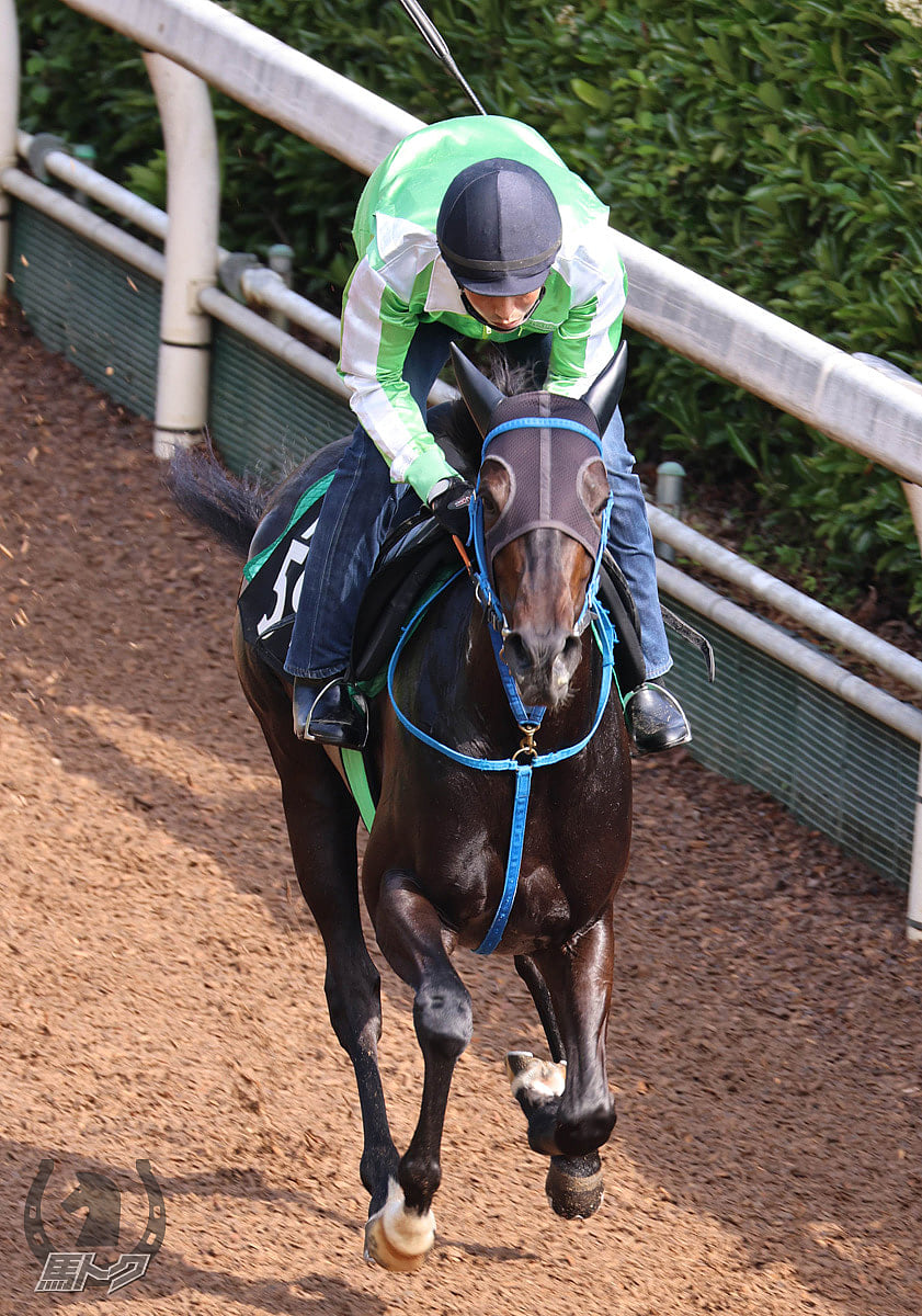 レディバグの馬体写真