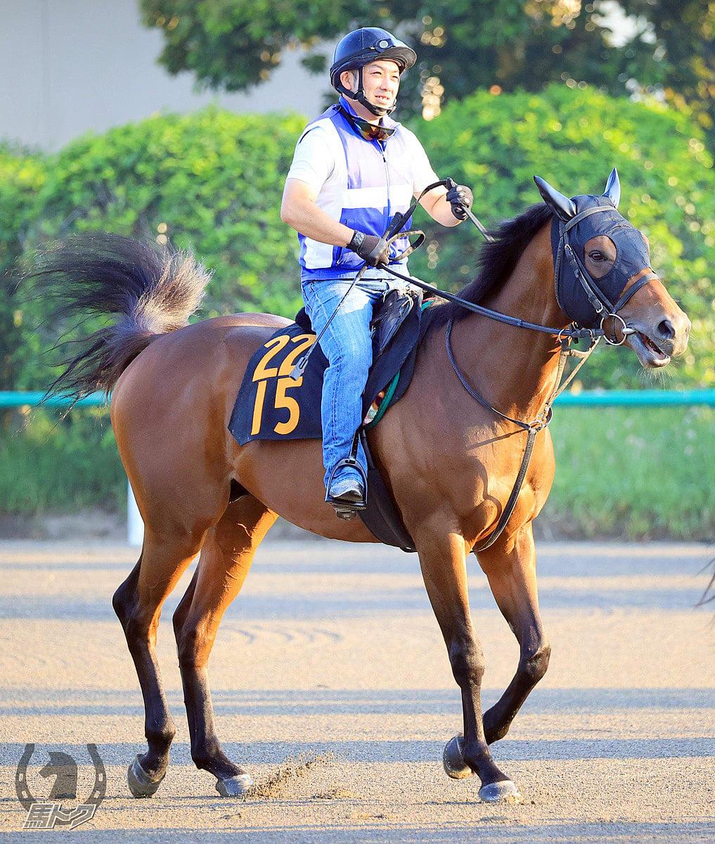 ゲンパチフォルツァの馬体写真