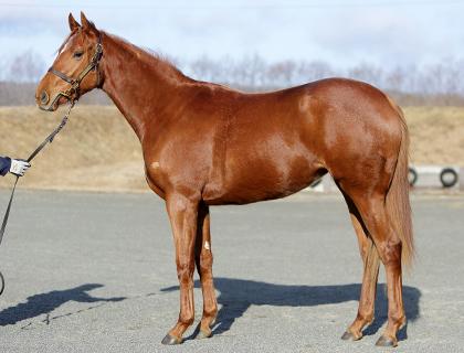ノーデザイアの馬体写真