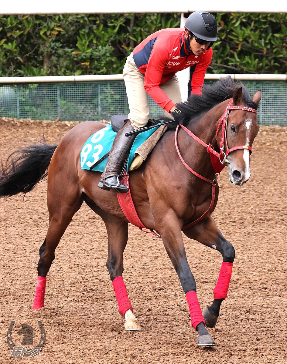 ピンクカメハメハの馬体写真