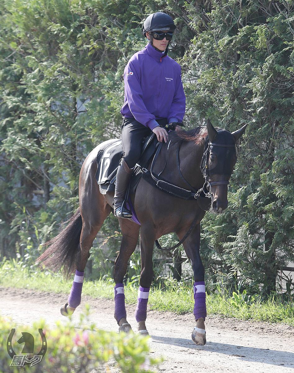 オヌールの馬体写真