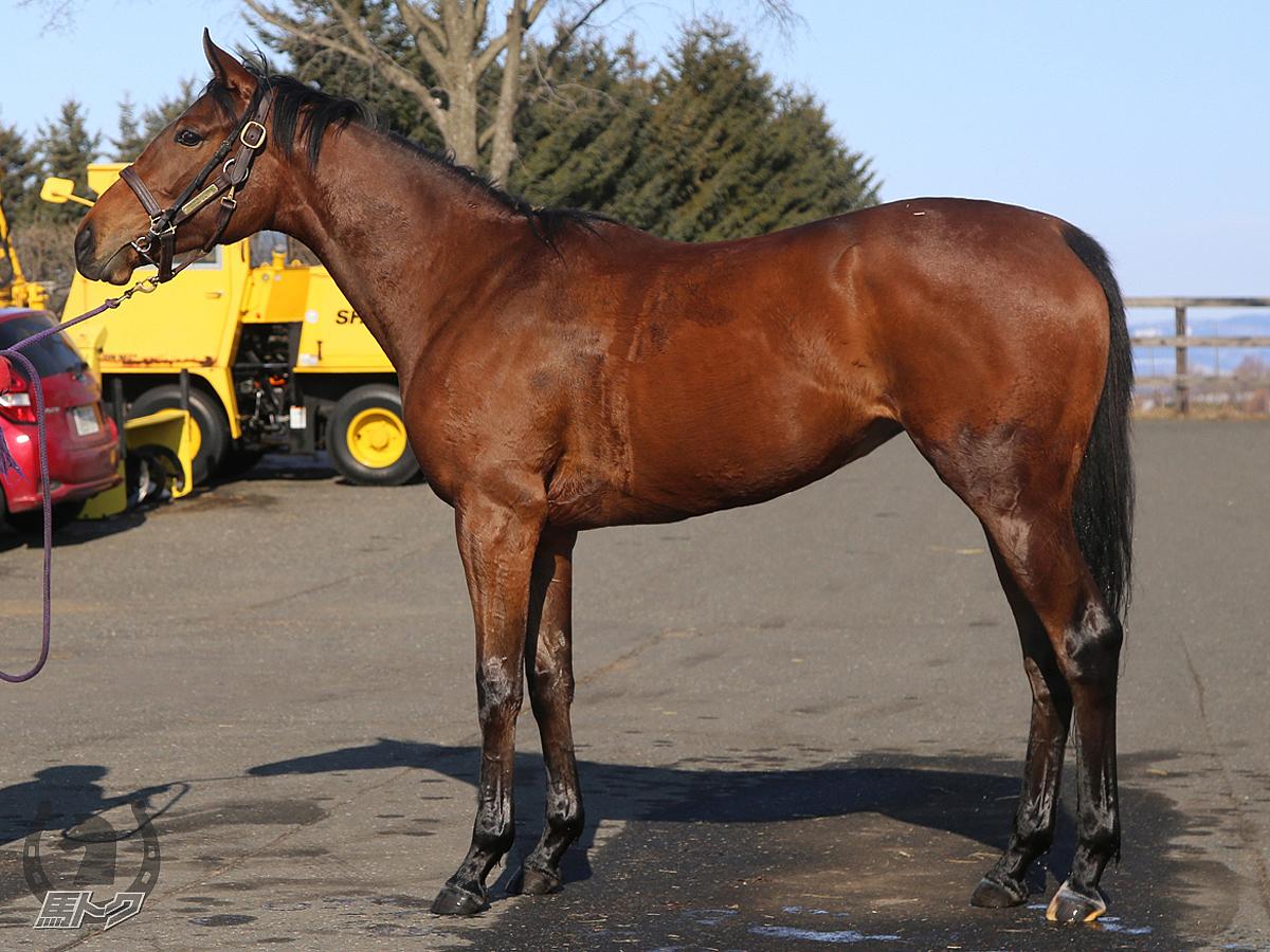 ムーンビードの馬体写真