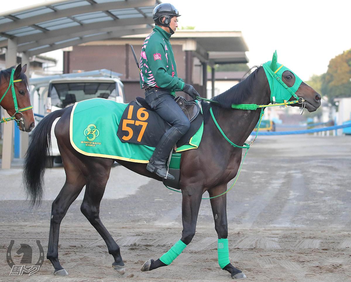 オメガロマンスの馬体写真