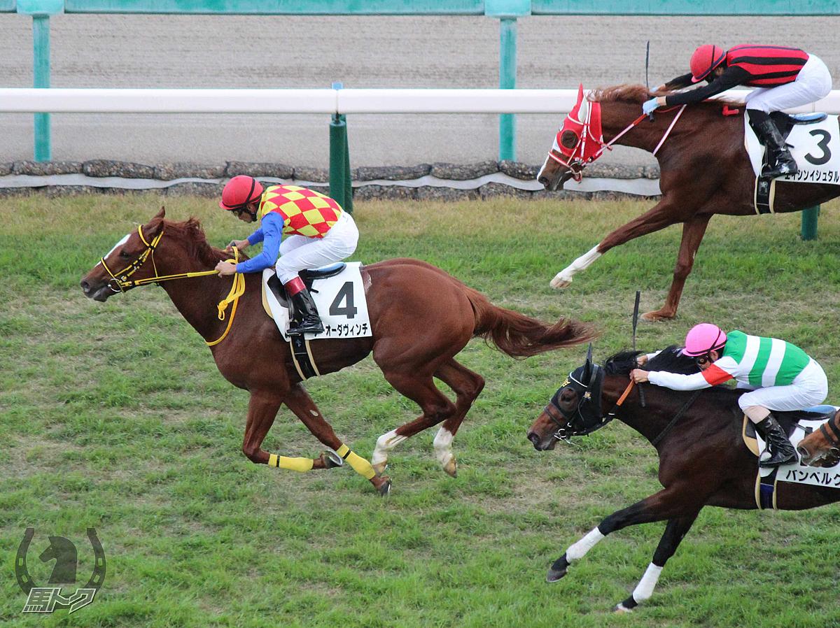テーオーダヴィンチの馬体写真