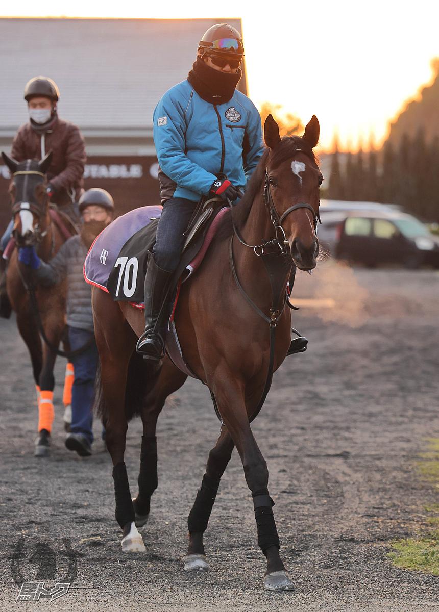アンブレラデートの馬体写真