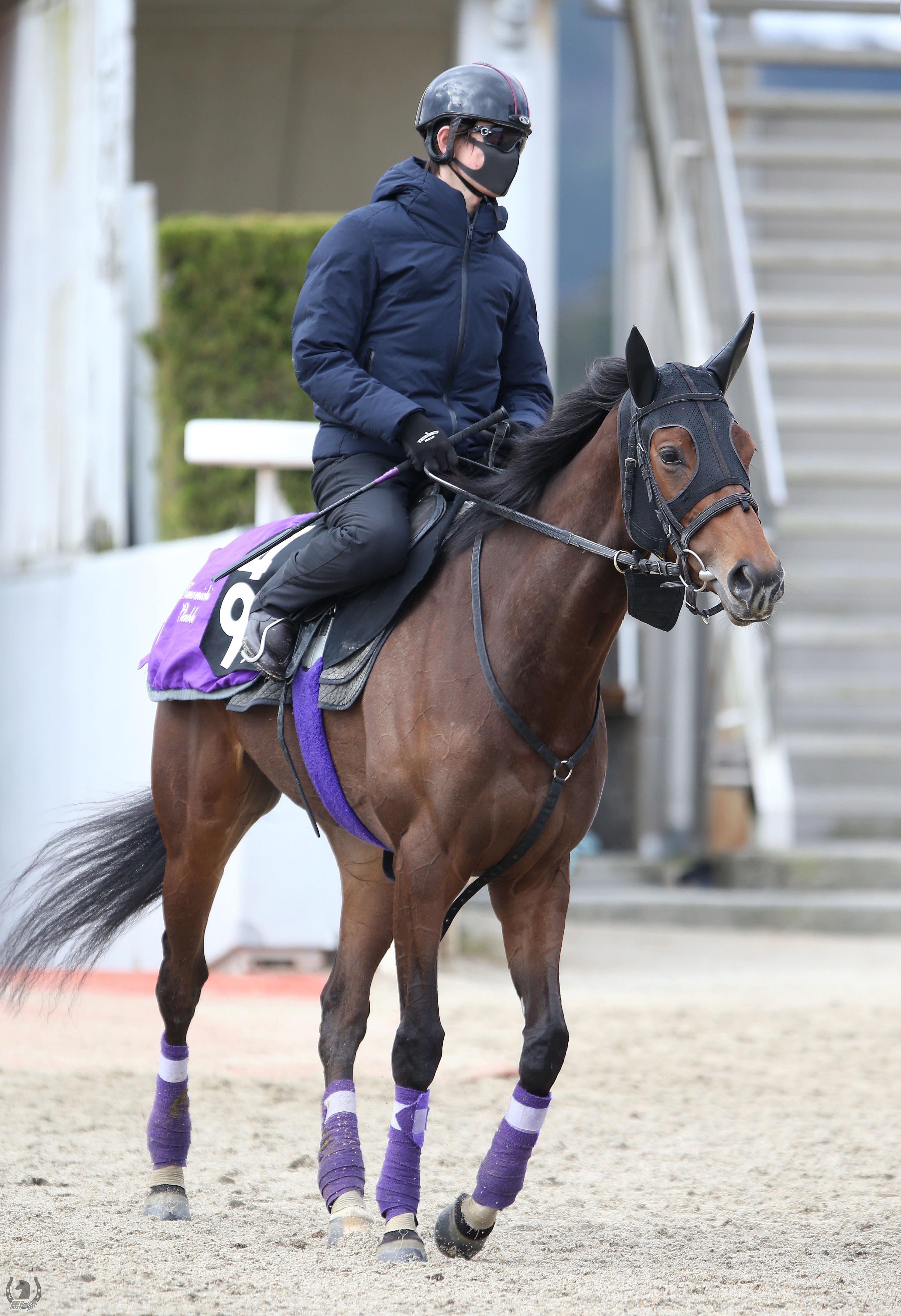 シャドウエリスの馬体写真