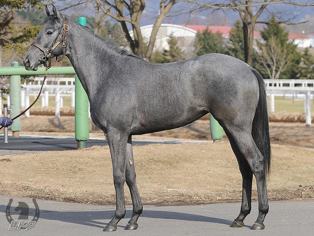 パレドジュスティスの馬体写真