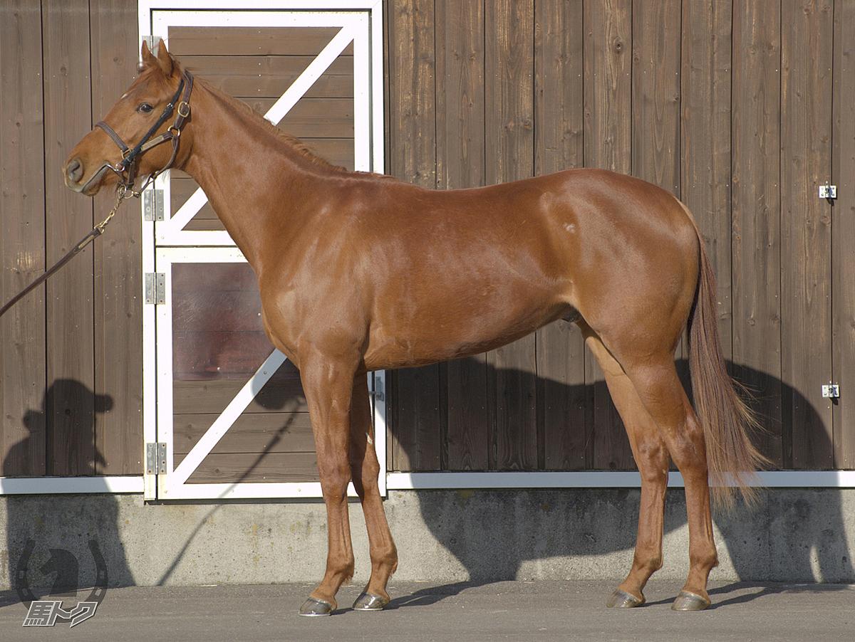 スワーヴエルメの馬体写真