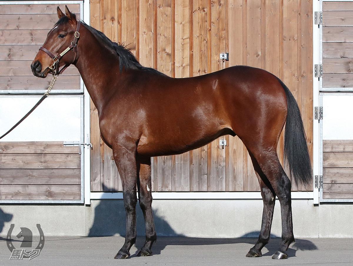 ガンダルフの馬体写真