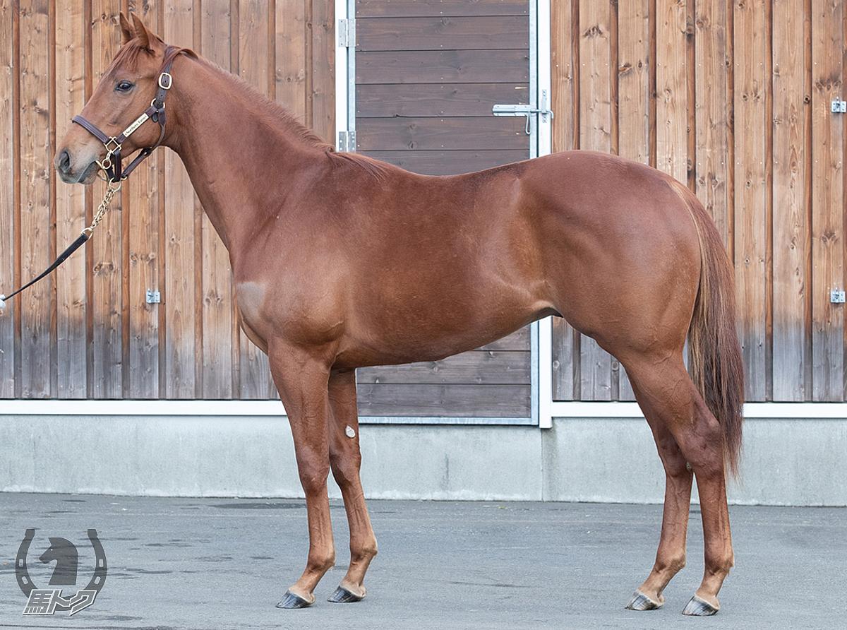 ベルンハルトの馬体写真