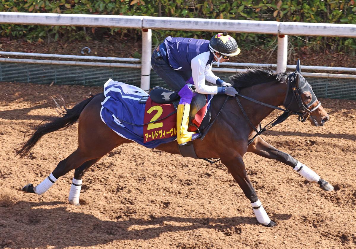 アールドヴィーヴルの馬体写真