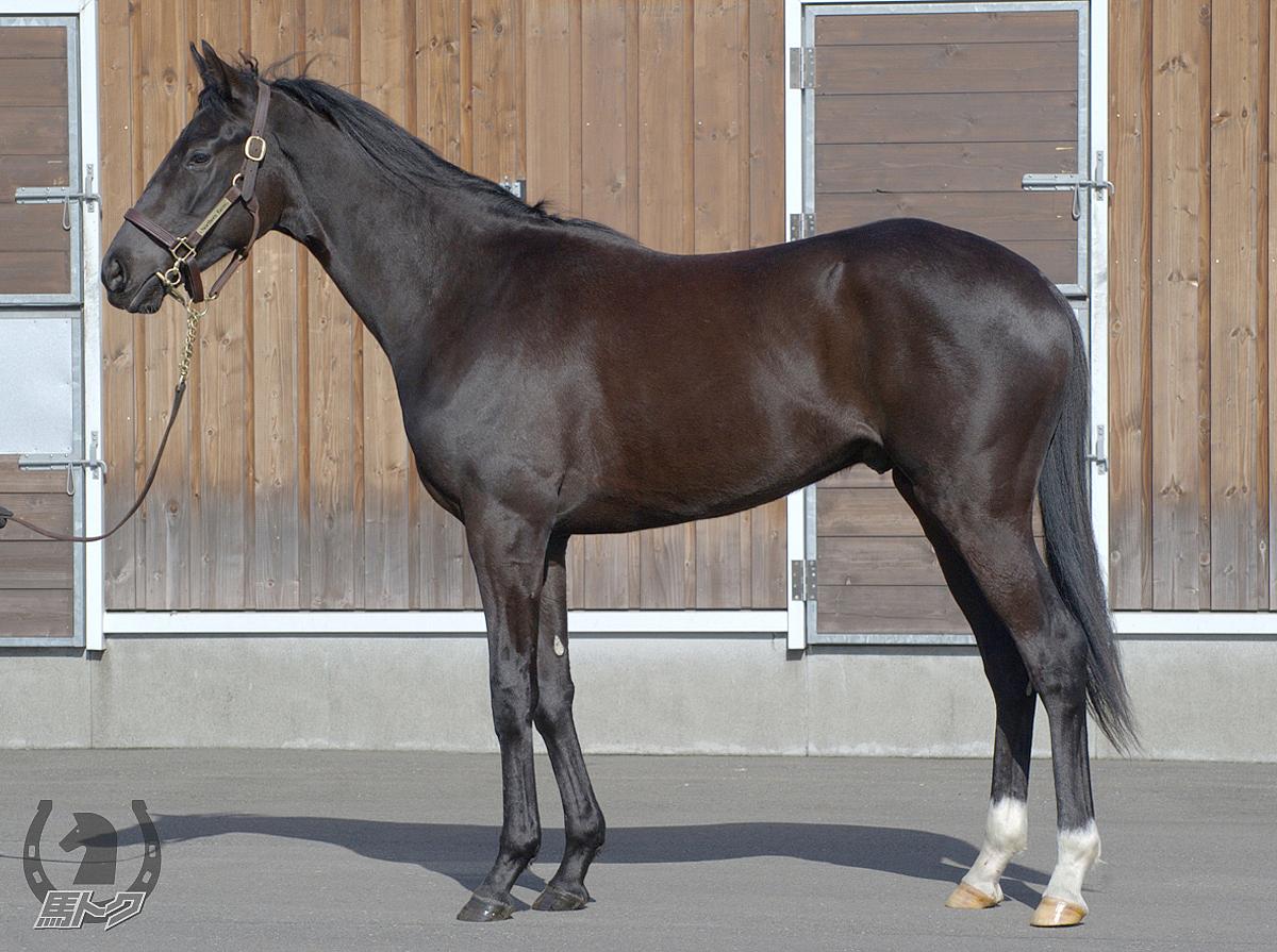 ギルティブラックの馬体写真