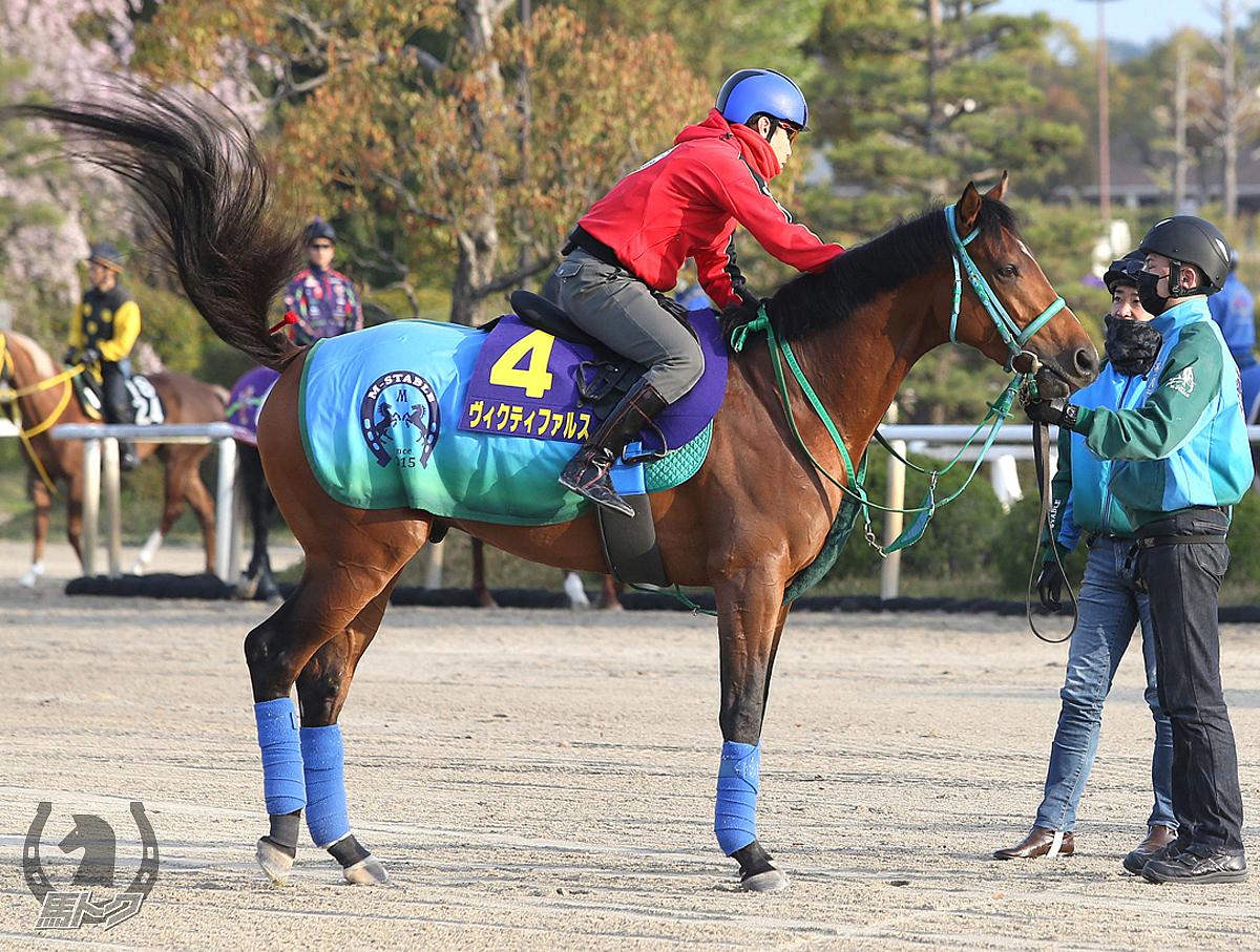 ヴィクティファルスの馬体写真