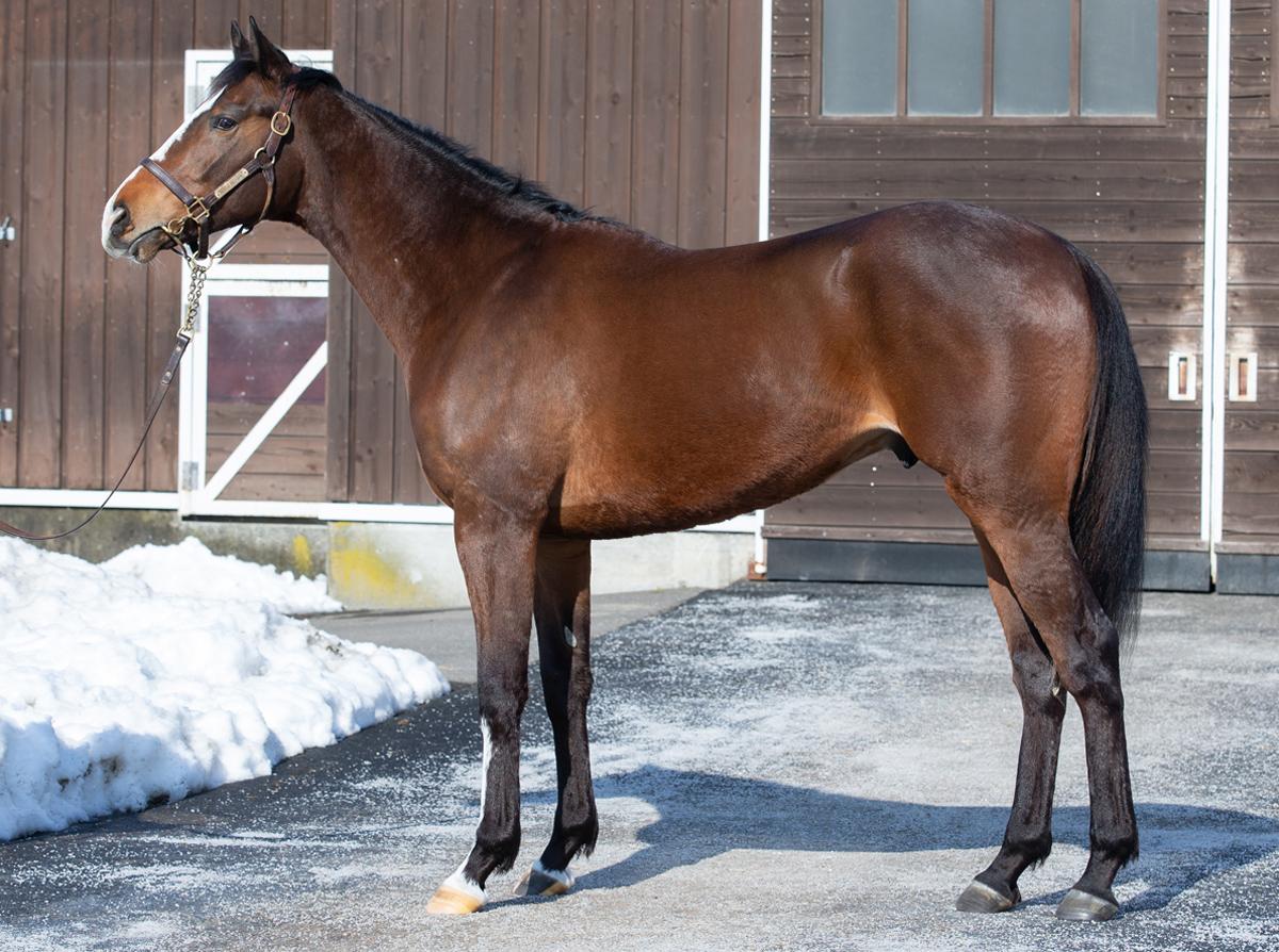 カーディナルの馬体写真