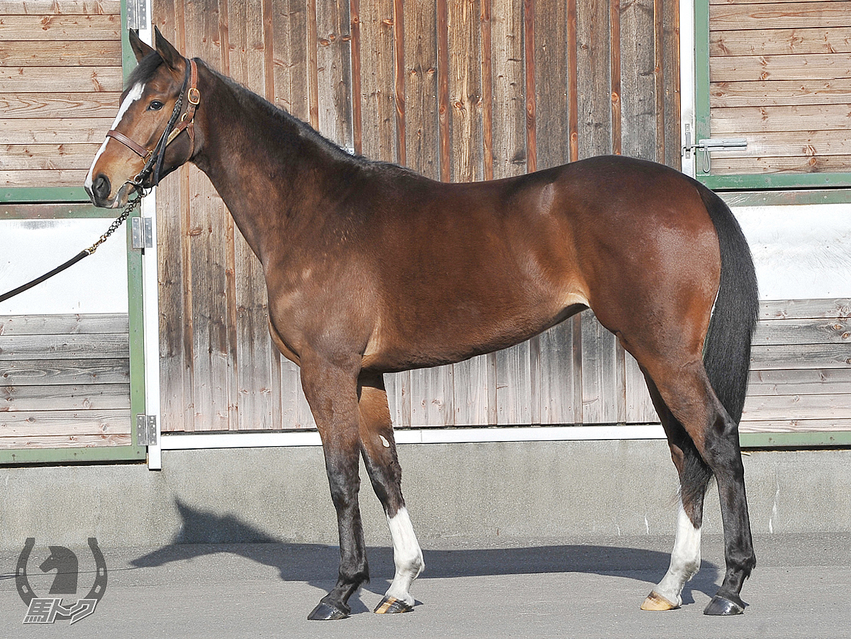 ミルウの馬体写真