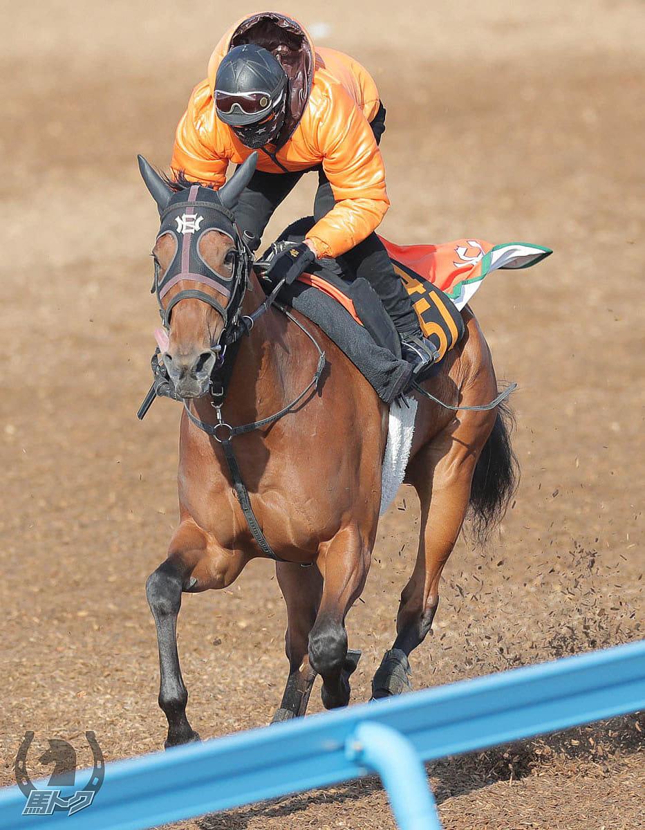 コウソクカレンの馬体写真