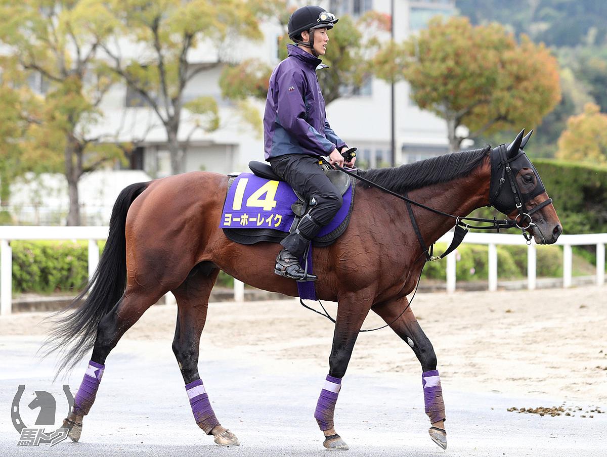 ヨーホーレイクの馬体写真