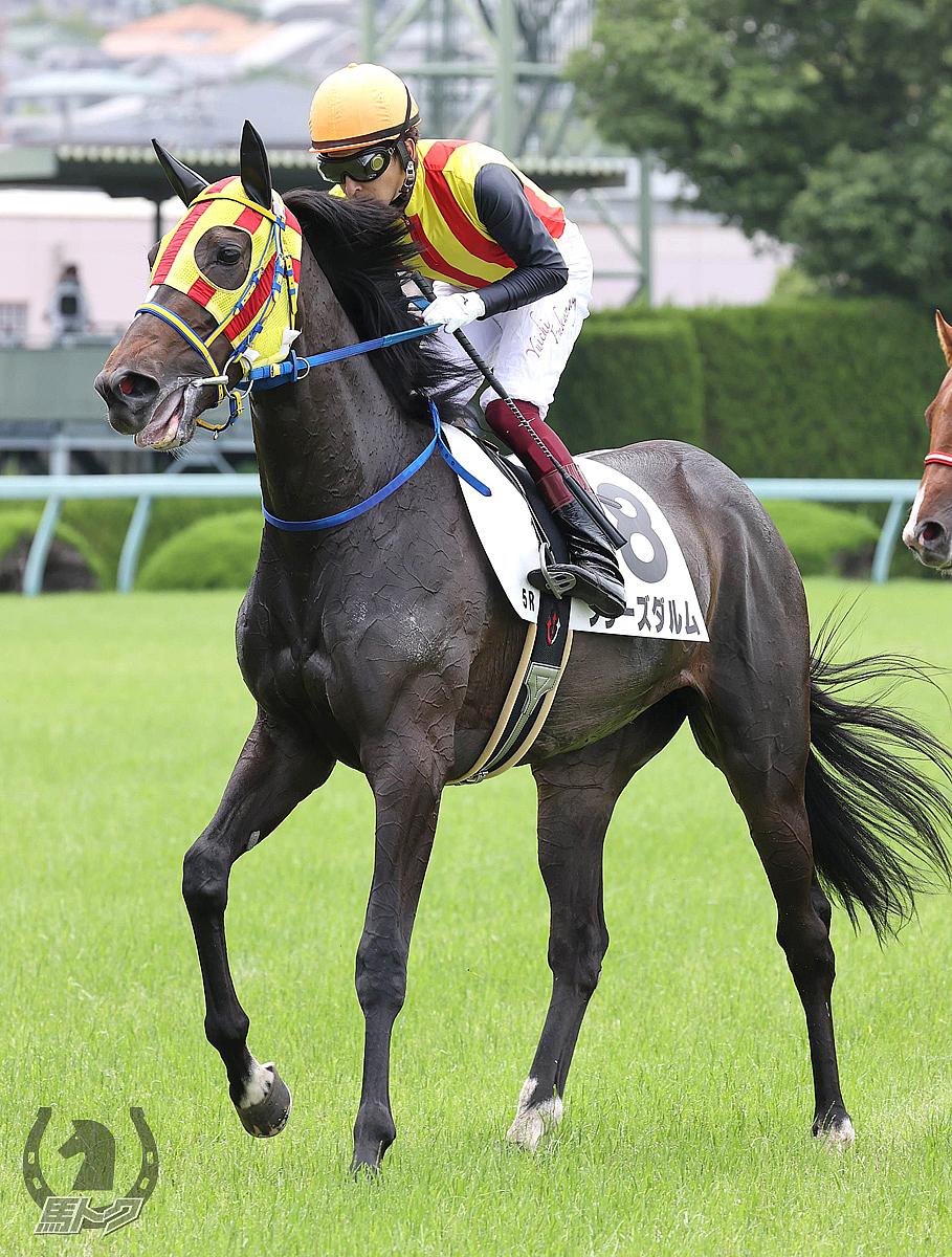 フラーズダルムの馬体写真