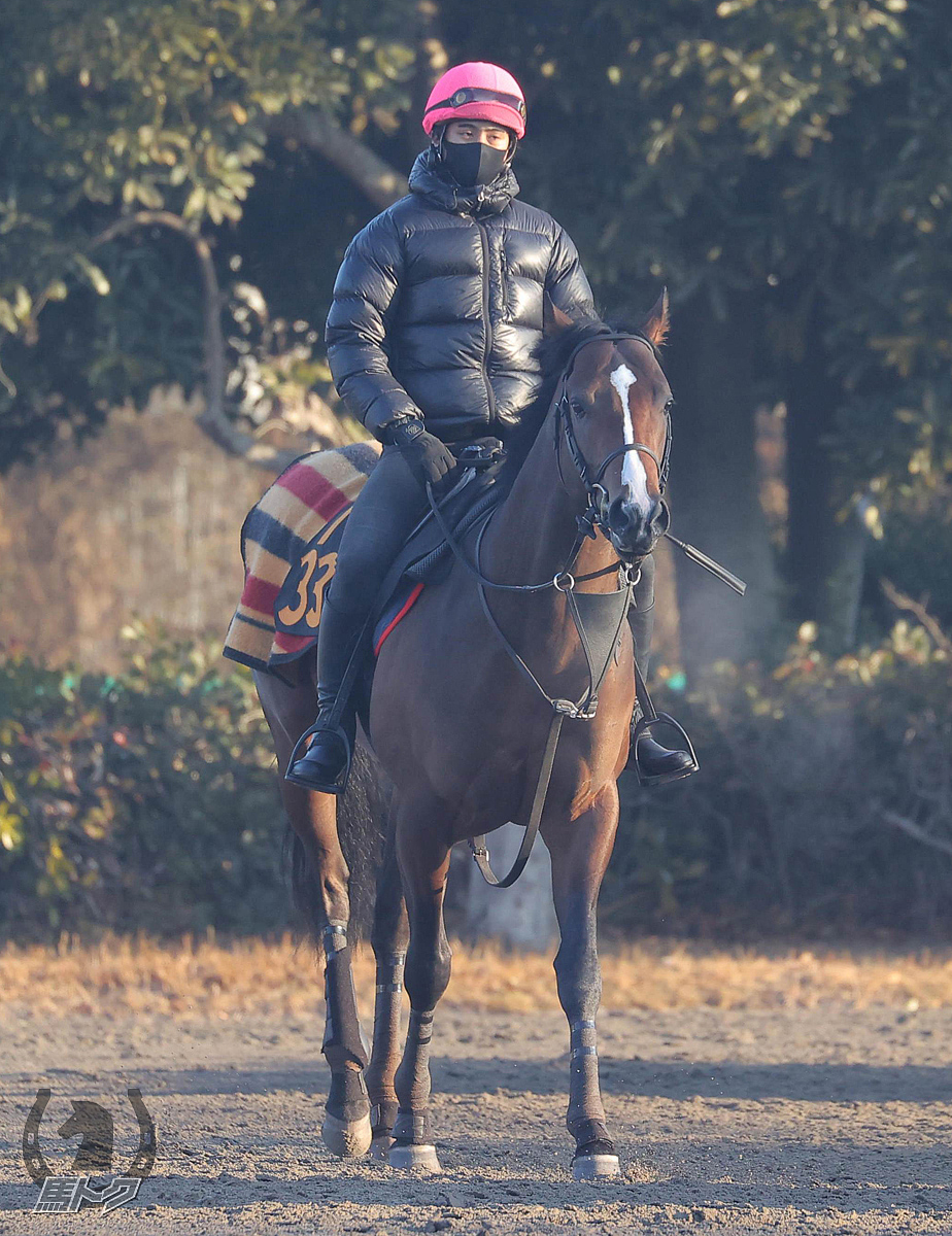 ヴァイスメテオールの馬体写真